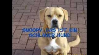 Snoopy, das ist ein schlauer Hund